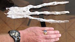 Thumbnail image for What is it? Huge 3-fingered 'alien' hand found in Peru (videos, photos)