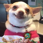 Thumbnail image for Your puppy loves Fridays too! (#FFF Feliz Frijol Friday meme)